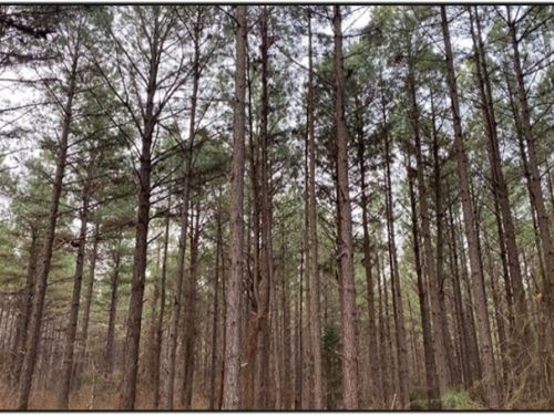 345 Acres In Lafayette County In Ox : Oxford : Lafayette County : Mississippi