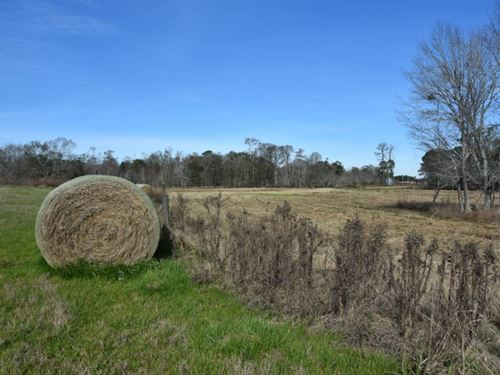 True Farm And Recreational Tract : Sycamore : Tift County : Georgia