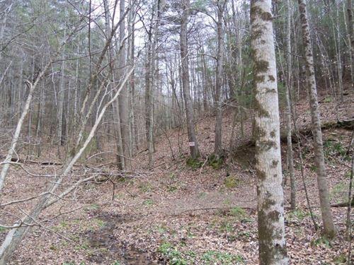 Large Acreage For Sale in Floyd VA : Check : Floyd County : Virginia