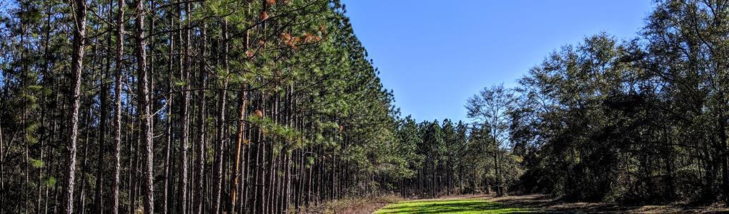 Bear Creek Hunting Cabin Good Deer : Quincy : Gadsden County : Florida
