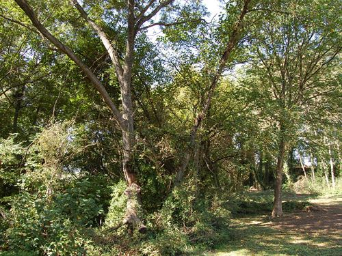 Secluded Lot in Trees : Henderson : Vance County : North Carolina