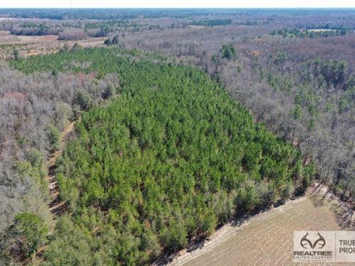 Estill Hunting & Recreational Land : Estill : Hampton County : South Carolina