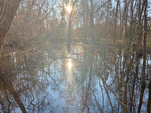 275 Acres Hunting Timberland For Sa : Bentonia : Yazoo County : Mississippi