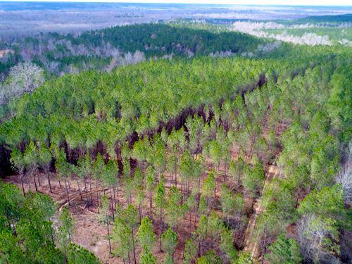 Millport Hunting Timber Investment : Millport : Lamar County : Alabama