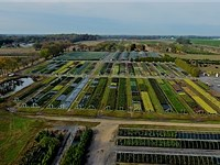 Brock Farms Wholesale Nursery : Bridgeton : Cumberland County : New Jersey