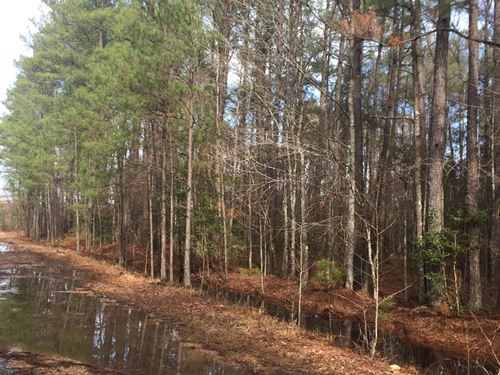 Union Co, Recreational Pine Hunting : Junction City : Union County : Arkansas