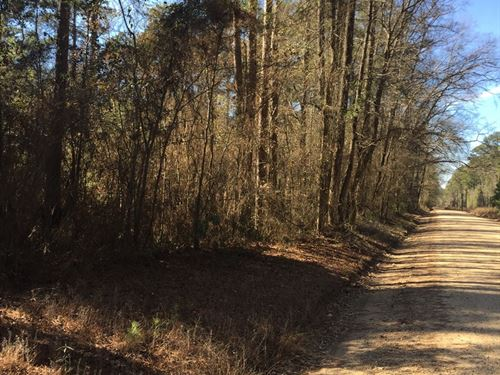 Rural Timberland, Home Potential : Junction City : Union County : Arkansas
