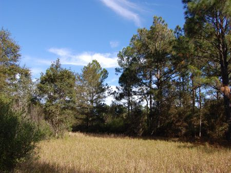 Price Reduced : Keystone Heights : Clay County : Florida