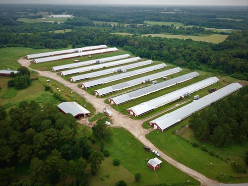 10 House Broiler Poultry Farm : McKenzie : Butler County : Alabama