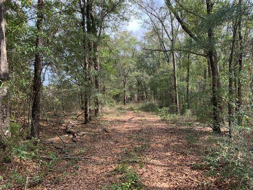 Wooded Acreage Near Ft Rucker : Ozark : Dale County : Alabama