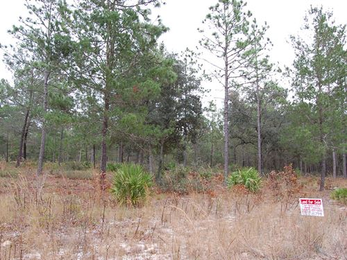 Large Secluded Residential : Florahome : Putnam County : Florida
