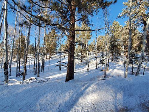 Land Mueller State Park : Florissant : Teller County : Colorado