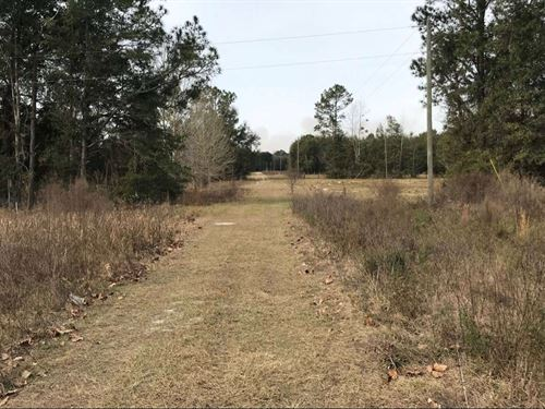Quiet Country Land : O'brien : Suwannee County : Florida