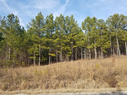 Timbered Acreage, Flowing Branch : Centre : Cherokee County : Alabama