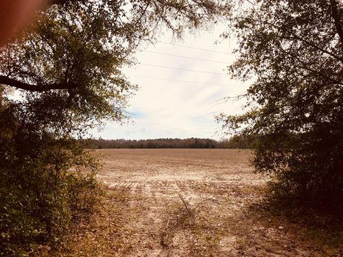 Pine Needle Farm : Newington : Screven County : Georgia