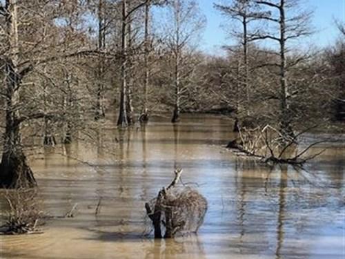Lee County Big Piney Creek Farm : Moro : Lee County : Arkansas