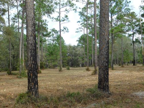 39+ Acres With Mature Oaks and Pine : Wellborn : Suwannee County : Florida