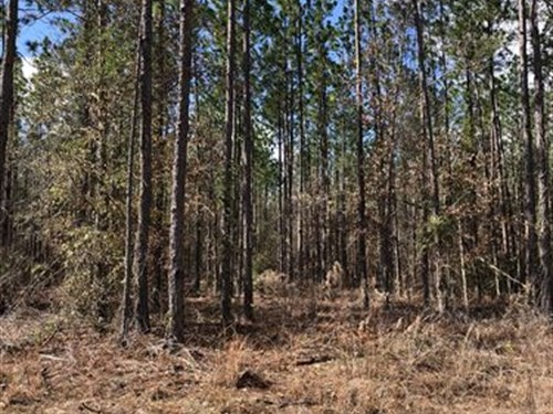 Summertown Longleaf Tract : Summertown : Emanuel County : Georgia