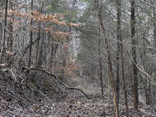 Unrestricted Land : Sneedville : Hancock County : Tennessee
