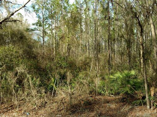 Acreage In North Central Florida : Lake City : Columbia County : Florida