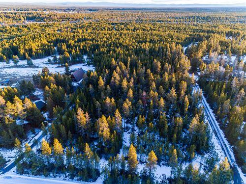 Tall Trees, Mountain Views in OR : La Pine : Deschutes County : Oregon