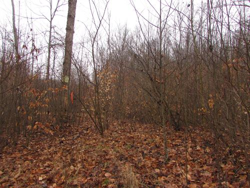 Great Hunting Area in Ohio : Amesville : Athens County : Ohio