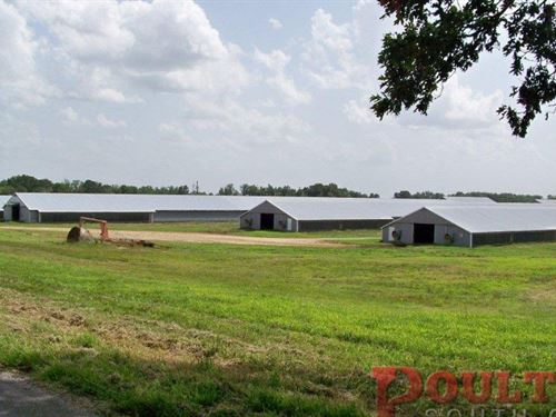 MT Pleasant Poultry and Cattle : Grove Oak : DeKalb County : Alabama