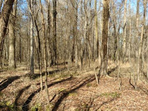 Lake Sinclair Hunting : Eatonton : Putnam County : Georgia