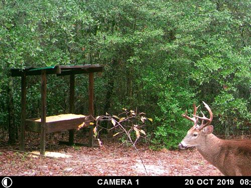 Cabin With Great Hunting : Soperton : Treutlen County : Georgia