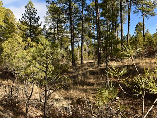 Relax & Be At One With Nature : Timberon : Otero County : New Mexico