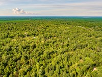 Wooded Lot With Utilities : Cleveland : Liberty County : Texas