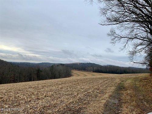213 Acres of Land With Farmhouse : Orangeville : Columbia County : Pennsylvania