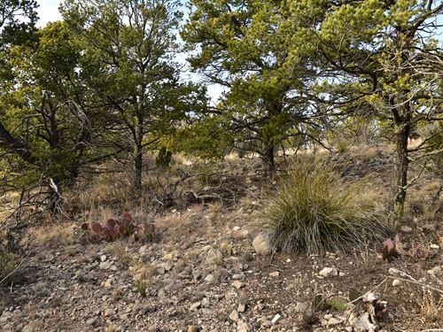 2.60 Acre Wooded Lot in Otero : Timberon : Otero County : New Mexico