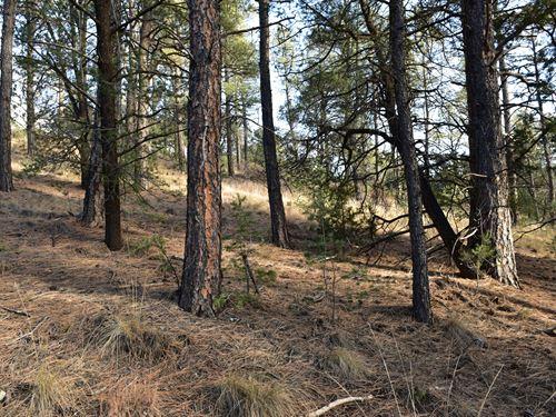 1.31 Acre With Plenty of Trees : Timberon : Otero County : New Mexico