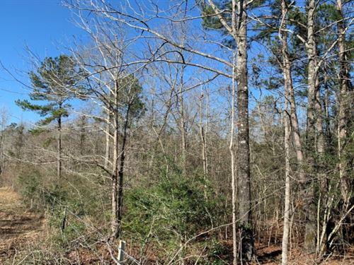 10 Acres In Covington County In Col : Collins : Covington County : Mississippi