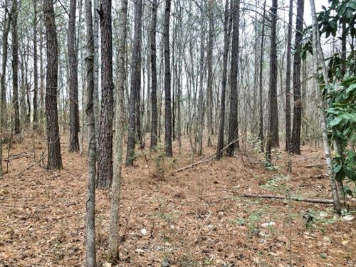 50 Acre Home Site Hunting Timber LA : Wesson : Copiah County : Mississippi
