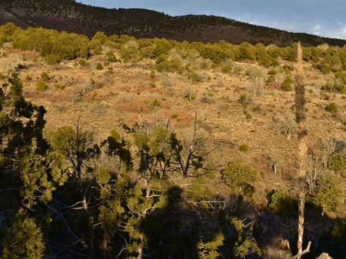 Beautiful Mountain View Among Trees : Timberon : Otero County : New Mexico