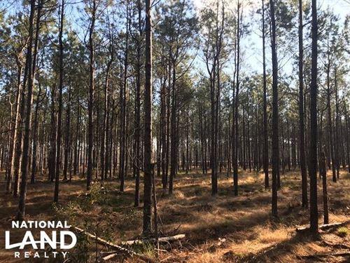 Lane Hunting Retreat : Lane : Williamsburg County : South Carolina