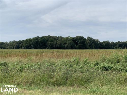 Hunting And Irrigated Farmland : Winnsboro : Franklin Parish : Louisiana