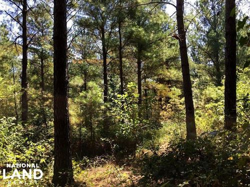 Burnsville, Mature Pine Investment : Burnsville : Tishomingo County : Mississippi