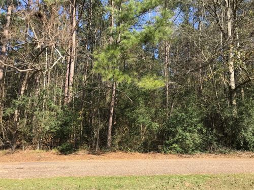 17 Acres In Pike County In Magnolia : Magnolia : Pike County : Mississippi