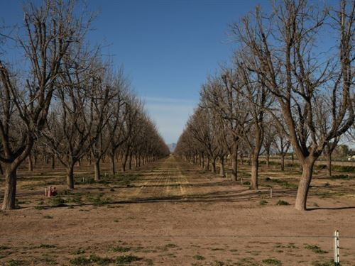 Half Acre Available With Power $39 : Deming : Luna County : New Mexico