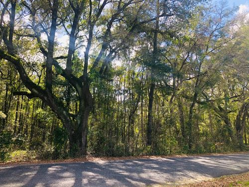 High Springs Vacant Land : High Springs : Alachua County : Florida