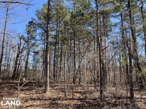 40 Acres Timberland on Acorn Roa : Rupert : Van Buren County : Arkansas