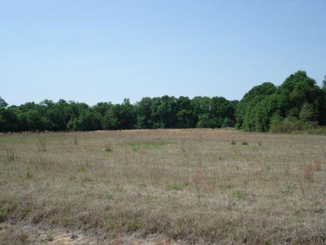 Two 20 Plus Acre Mini Estate Lots : Hawkinsville : Pulaski County : Georgia