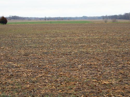 Land Auction In Gibson Co., Indiana : Francisco : Gibson County : Indiana