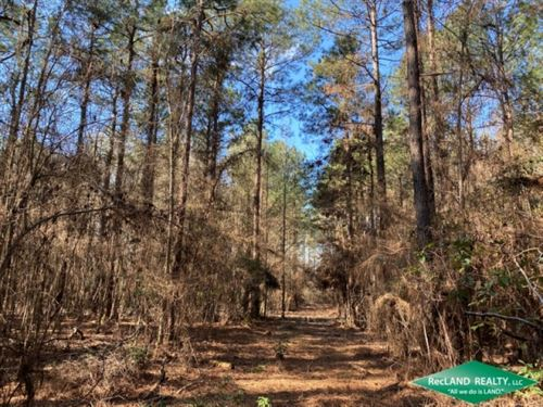 168 Ac, Pine Timber & Hunting : Chatham : Jackson Parish : Louisiana