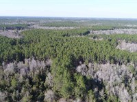 Great Timber Investment and Hunting : Greenville : Madison County : Florida