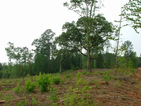 Reduced  Homesite or Hunting : Mcintyre : Wilkinson County : Georgia
