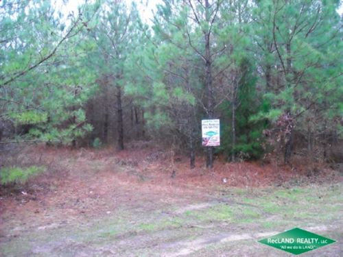 5 Ac, Small Hunting Tract : Hodge : Bienville Parish : Louisiana